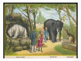 Regent's Park Zoo London Visitors Admire the White Bear the Elephant and the Kangaroo Giclee Print