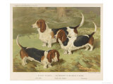 Three Basset Hounds Giclee Print