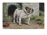 "Bulldog Stands Outside His Kennel in an Advertisement for ""City Meat"" Dog Biscuits Giclee Print"