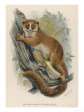 Black-Eared Mouse Lemur Climbing a Tree Giclee Print