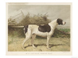 Classic Pointer Standing in the Field Giclee Print