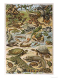 An Amazing Illustration Covering the Whole Range of Reptilian Species from Snakes to Newts Giclée-tryk