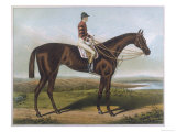 Winner of the Derby and St. Leger in 1881 Giclee Print