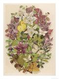 Mentha Pulegium Giclee Print