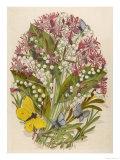 Convallaria Giclee Print