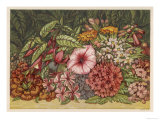 Cultivated Autumn Flowers Including: Lantana Giclee Print