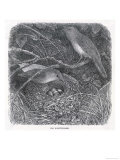 Nightingales on Their Nest Giclee Print