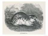 An Unidentified Type of Lemming Giclee Print