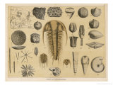 Life-Forms of the Paleozoic Epoch Reproduction procédé giclée par Ferdinand Von Hochstetter