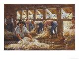 In an Australian Sheep Shearing Shed Gicléedruk van Percy F.s. Spence