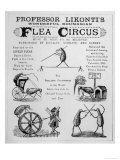 Broadsheet Advertising Professor Likonti&#39;s Romanian Flea Circus During Visit to London Giclee Print