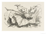 The Snap-Dragon-Fly Giclee Print by John Tenniel