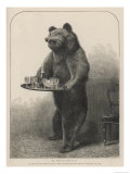 Bear Waiter Giclee Print