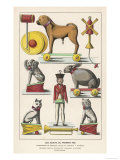 Various Toys from a French Catalogue Giclee Print