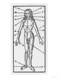 Phlebotomy Chart of the Human Body Showing Giclee Print