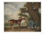 "Great-Grandson of ""Darley Arabian"" Raced 1769-1770 in 18 Races All of Which He Won Giclee Print by George Stubbs"