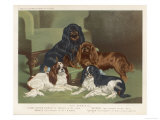 Four King Charles Spaniels One of Each Colour: 1. Blenheim 2. Black and Tan 3. Ruby 4. Tricolour Giclee Print