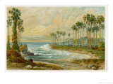 Palmyra Palms Provide Little Shade on a Sri Lanka Beach Giclee Print by Von Konigsbrunn