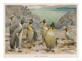 Colony of King Penguins Gicleetryck