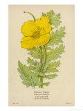 Horned Poppy Giclee Print by Mabel E. Step