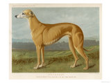 An Example of a Fallow Colour Greyhound Standing Giclee Print