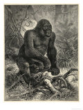Gorilla (Troglodytes Gorilla) in the Jungle Giclee Print by  Specht