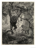 Two Gorillas in the Jungle Giclee Print by Whymper