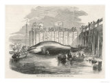 Whale Captured in the Thames at Grays Essex Giclee Print