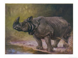 An Indian One-Horned Rhinoceros Giclee Print by Cuthbert Swan