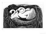 Two Swans Impression giclée par Clifford Webb