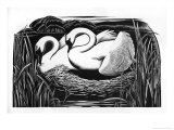 Two Swans Giclee Print by Clifford Webb