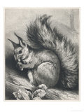 Red Squirrel Eating a Nut Premium Giclee Print by Harrison Weir