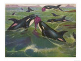 Orca Gladiator Found Giclee Print