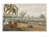 Pigsticking in India Giclee Print by Captain Thomas