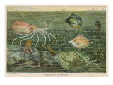 Mixture of Fish Octopus Crabs Sea Horses and Shellfish on the Sea Bed Giclée-tryk