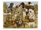 Large Assortment of Dogs: Including:Hounds Setters and Spaniels Giclee Print