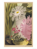 Plumose Anemone and Some Other Marine Creatures Giclee Print