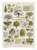 Decorative Page Showing Fruit Trees and Ways to Cultivate Them Giclee Print