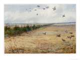Partridges at Sandringham Giclee Print by Archibald Thorburn