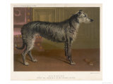 Dark Grey Deerhound Stares Thoughtfully into the Distance Giclee Print