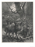 Herd of Wild Boar Wander Through the Woods Giclee-tryk i høj kvalitet af  Specht