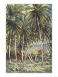 Native Australian Climbs a Coconut Palm in Northern Queensland Giclee Print by Percy F.s. Spence