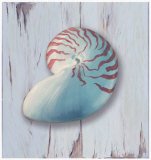 Distressed Shells II Print by Robert Downs