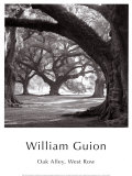 William Guion - Oak Alley, West Row Obrazy