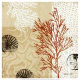 Impresiones de coral II Láminas por Tandi Venter