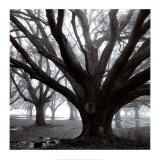 Oak Grove, Winter Kunst af William Guion