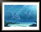 Atlantic Bottlenose Dolphin Posters by Bill Northup