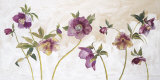 Helebores Posters by Valerie Roy