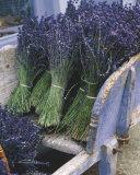 Lavender Harvest Kunstdrucke von Gunter Rossenbach