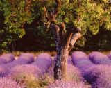 Provence Print by Bryan F. Peterson